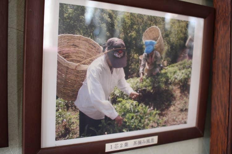 スリランカで撮影された、茶摘みをしている風景の写真が飾られていました。