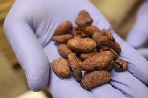 ▲カカオ豆は焙煎後、全て手作業で皮をむくというこだわり!
