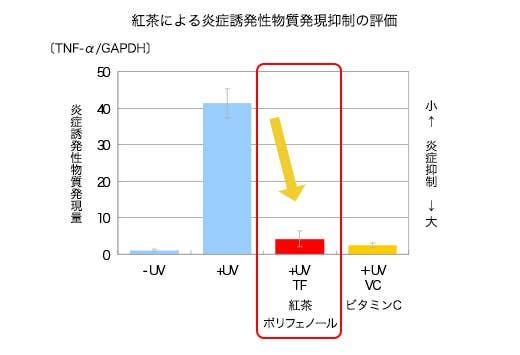 ヒトの皮膚細胞(表皮角化細胞)に対して紫外線UV-Bを当てた後に、紅茶ポリフェノールを含む培地に移し、炎症を引き起こす物質TNF-αを測定した。*紅茶ポリフェノールはテアフラビン類を使用し、テアフラビン類及びビタミンCの最終濃度は10μg/mlとした。*グラフの縦軸は、炎症誘発性物質TNF-αの発現量をGAPDHに対する相対比で示した。